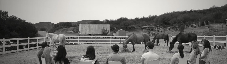 fulcrum equine team building with horses